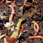 Domácí kompostování a žížaly- Eva Samešová