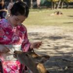 Jak se připravit na Japonsko – Marek Eiba